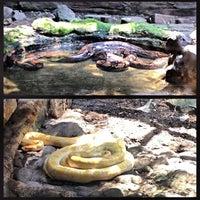 Photo taken at Kebun Binatang Ragunan by Lora A. on 8/28/2013