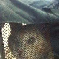Photo taken at Four Paws Animal Hospital by Nona on 5/2/2013