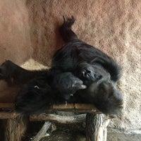 Photo taken at Pavilon goril by Sar G. on 5/7/2013