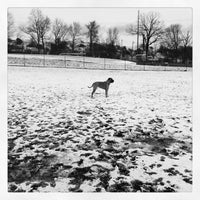 Photo taken at Normanskill Dog Park by karen r. on 2/16/2013
