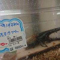 4/23/2018に🐽が道の駅 ぐりーんふらわー牧場・大胡で撮った写真