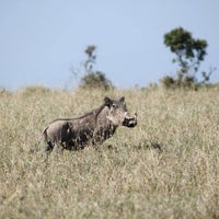 Photo taken at RAC Nairobi by Brian A. on 3/24/2014