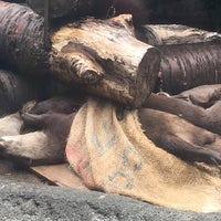Photo taken at 多摩動物公園 コツメカワウソ舎 ゴンタ一家前 by 花園宮 on 6/25/2017