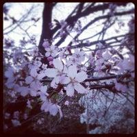Photo taken at Arboretum in Durand Eastman Park by Stephen Y. on 4/25/2013