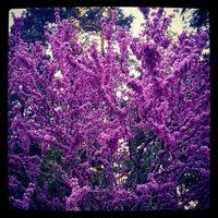 Photo taken at Arboretum in Durand Eastman Park by Stephen Y. on 5/7/2013