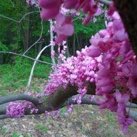 Photo taken at Arboretum in Durand Eastman Park by Stephen Y. on 5/14/2013