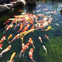 Photo taken at Tùng Sơn Thạch Hoa Viên - Rin Rin Park by Larry on 9/2/2014