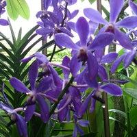 Das Foto wurde bei National Orchid Garden von Tomomi N. am 7/15/2013 aufgenommen