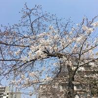 3/25/2018にshuheyが江坂公園で撮った写真