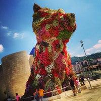 8/18/2013에 gogogogogo g.님이 Puppy (Guggenheim)에서 찍은 사진