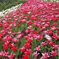 Photo taken at Tulip Festival Headquarters by Cherif H. on 5/21/2016