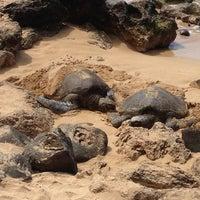 Foto tomada en Laniakea (Turtle) Beach por Zak T. el 3/13/2013