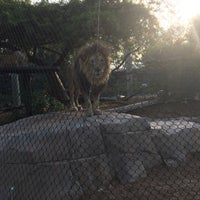 Photo taken at Lion and Jaguar Habitat by Beebz on 8/23/2017
