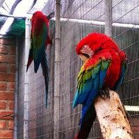 Gladys Porter Zoo 500 E Ringgold St