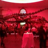 Das Foto wurde bei Senckenberg Naturmuseum von Jelena A. am 5/4/2013 aufgenommen