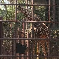 Photo taken at Giraffe by いぬ 三. on 3/28/2017