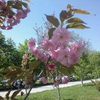 """Снимок сделан в Парк """"Гео Милев"""" (Park Geo Milev) пользователем Bilyana A. 4/27/2013"""