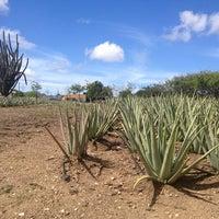 Foto tomada en Aloe Vera Plantation. por aline P. el 11/6/2013