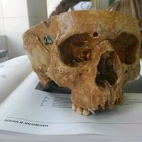 Photo taken at Институт за Анатомија / Institute for Anatomy by Melda E. on 10/24/2013