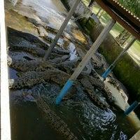 Photo taken at Taman Buaya (Crocodile World) by Yin P. on 11/29/2015