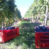 Foto scattata a Azienda Agricola Fratelli Aimasso da Fratelli A. il 9/14/2012