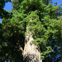 Photo taken at Big Tree by Charlene F. on 7/23/2016
