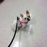 Photo taken at PetSmart by BEN on 1/29/2014