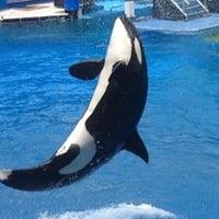 Photo taken at SeaWorld Orlando by Sharon L. on 7/4/2013