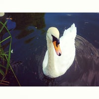 Photo taken at Swan Lake by Ksenia S. on 8/8/2013