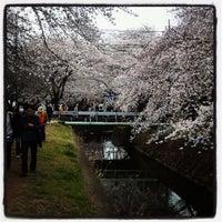 Photo taken at 千本桜 by Ken T. on 3/23/2013