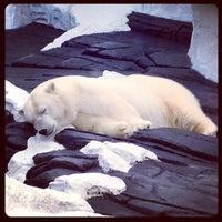 11/24/2012 tarihinde Eduard O.ziyaretçi tarafından Wild Arctic'de çekilen fotoğraf