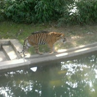 Photo taken at Great Cats at The National Zoo by Tim H. on 9/20/2012