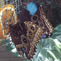 Photo taken at Cecil B. Day Butterfly Center by Patrick M. on 10/6/2012