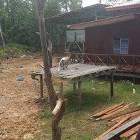 Photo taken at Labuk Bay Proboscis Monkey Sanctuary by Hana A. on 3/16/2014