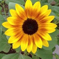 7/5/2013 tarihinde Gregory J.ziyaretçi tarafından Denver Botanic Gardens'de çekilen fotoğraf