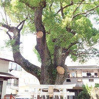 Photo taken at 八坂神社のクスの木 by kenjin . on 7/1/2014