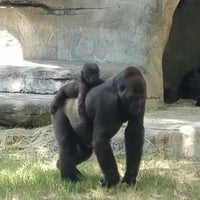 Photo taken at World of Primates at Ft. Worth Zoo by Jason (Bullet) D. on 8/5/2016