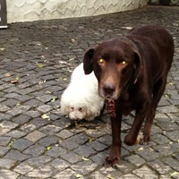 Photo taken at Quinta de Olivos Walking Trail & Dog Run by Hector M. V. on 8/17/2013