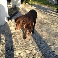 Photo taken at Quinta de Olivos Walking Trail & Dog Run by Hector M. V. on 6/10/2013