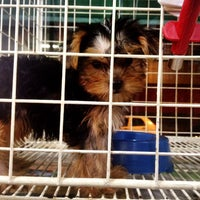 Photo taken at Pet Shop York News by Anna P. on 8/16/2014