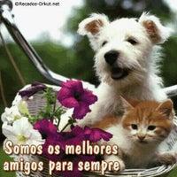 Photo taken at Consultório Veterinário Cantinho Animal by Elisandra F. on 6/14/2014