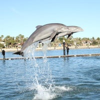 Photo taken at Cabo Dolphins by Los Cabos Tourism on 6/10/2014