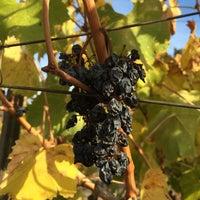 Photo taken at Crooked Vine/Stony Ridge Winery by Julia I. on 11/22/2015
