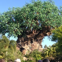 Photo taken at Disney's Animal Kingdom by Clay Y. on 2/28/2013