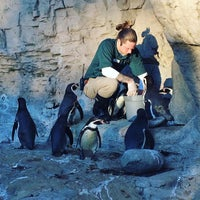 Photo taken at Penguin & Puffin Coast by Hana S. on 11/24/2017