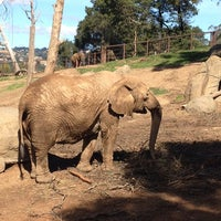 Photo taken at African Elephants by Andrew M. on 3/10/2014