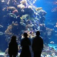 Photo taken at Steinhart Aquarium by Elizabeth C. on 11/21/2012