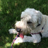 Photo taken at Rowayton Dog Park by Patricia F. on 5/22/2015