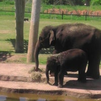 Photo taken at The Oklahoma City Zoo by kelley w. on 5/11/2013