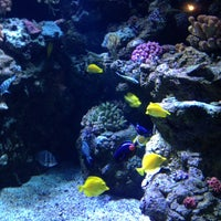 Photo taken at Aquarium of The Pacific by Renee L. on 7/24/2013